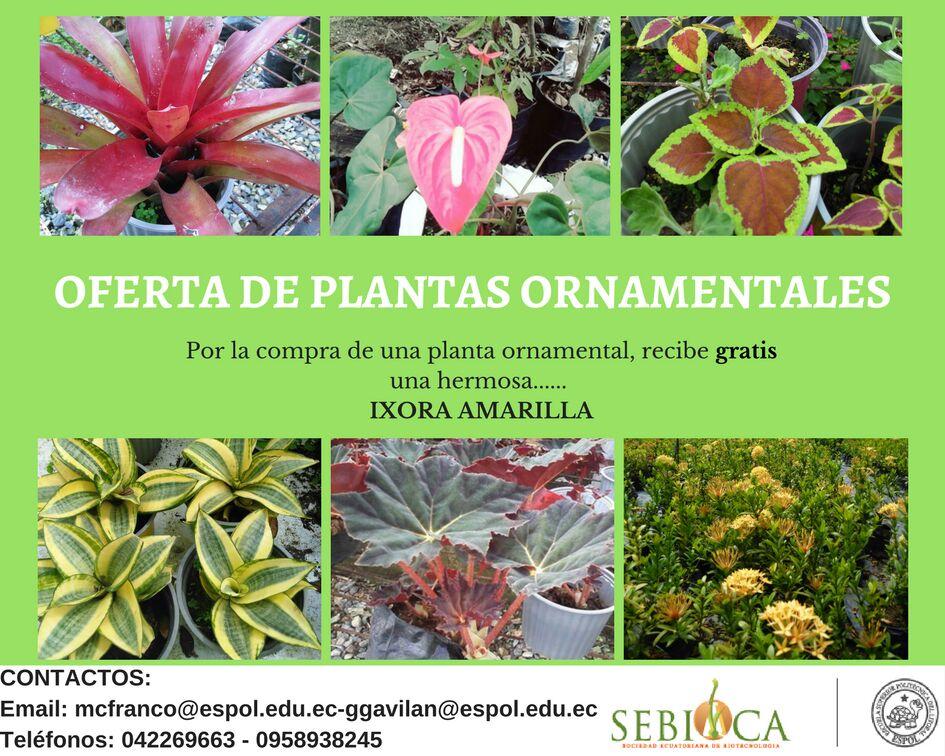 Oferta De Plantas Ornamentales Sebioca